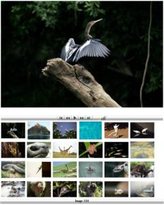Focused on Nature Photographs by Hussain Aga Khan