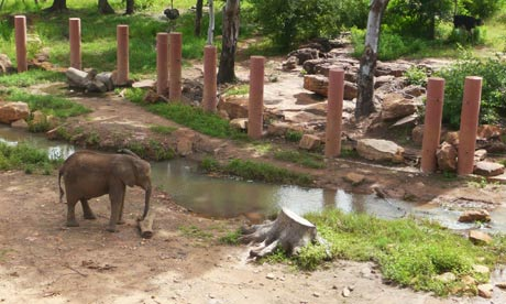 West Africa's newest zoo reopens its doors in Mali capital| theguardian.com
