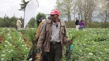 Aga Khan network leads volunteers to plant trees in Mt Kenya forest