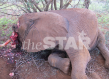 Alex Awiti: Stop This Massacre Of Elephants, Rhino