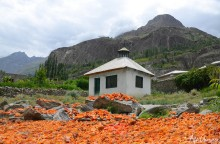 Minapin Hunza: Home of the best and delicious apricot