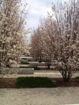 AKP - Trees