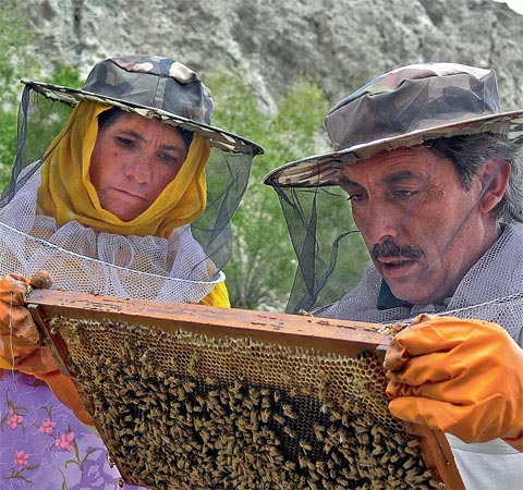 Life Lessons: (above) A woman learns honeybee farming, as part of the Foundation's award-winning empowerment project