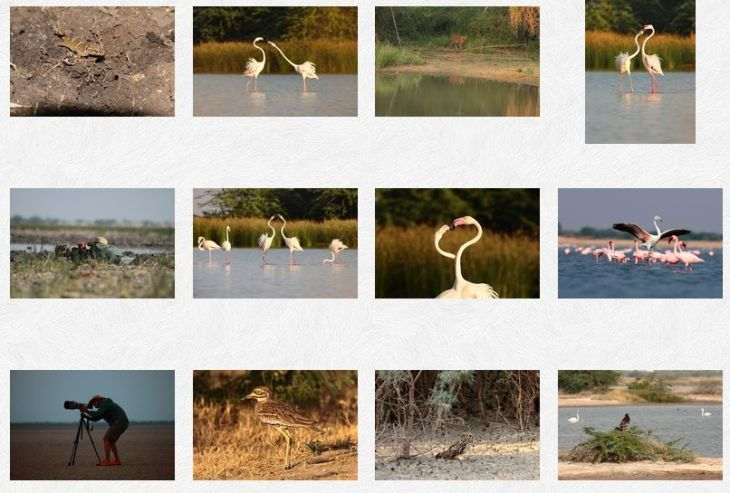 Samir Madhani: Wildlife Photographer