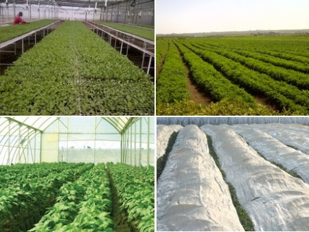 Ariff Shamji: Export season for Kenyan herbs heats up