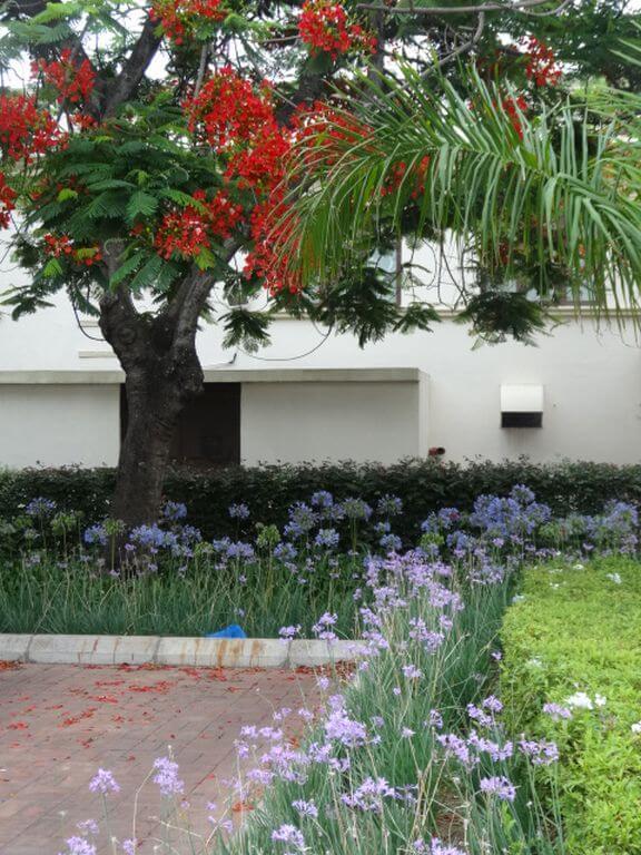 The restored gardens at the Polana Serena Hotel, Maputo