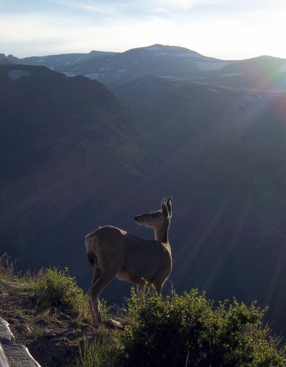 Mountain Deer Photo by Rasheed Hooda   National Geographic