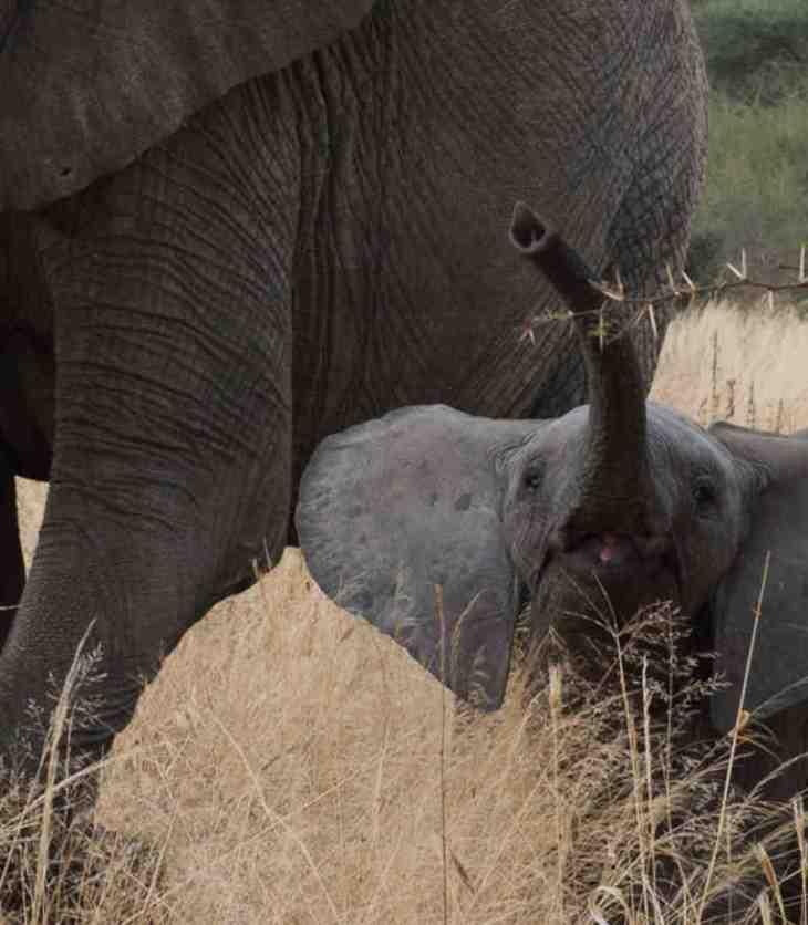 Sultan Jessa:Saving Africa's elephants for future generation