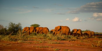 An insight into East Africa's environmental challenges