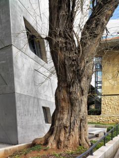 Mild weather in Beirut: Aga Khan Award for Architecture 2016 Winning Project: Issam Fares Institute Beirut, Lebanon