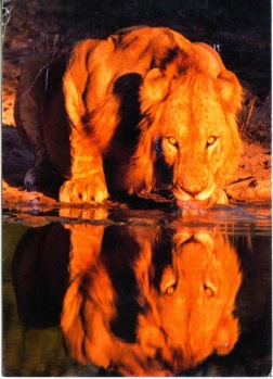 Ginan: Kesaree see(n)h Sarup Bhulaayo - The saffron colored lion forgot it's identity