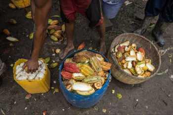Aga Khan Foundation raising cocoa farmer incomes in Madagascar