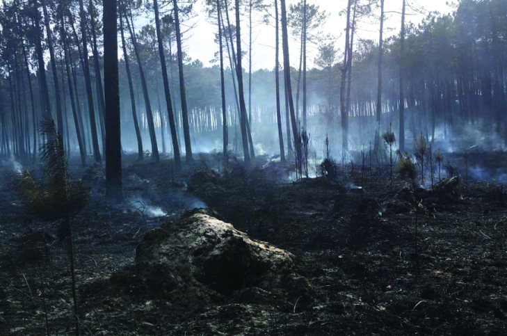 Aga Khan's foundation gives €100,000 towards post-fire reforestation