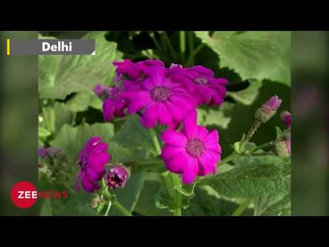 Watch Sunder Nursery in Delhi opens as heritage park