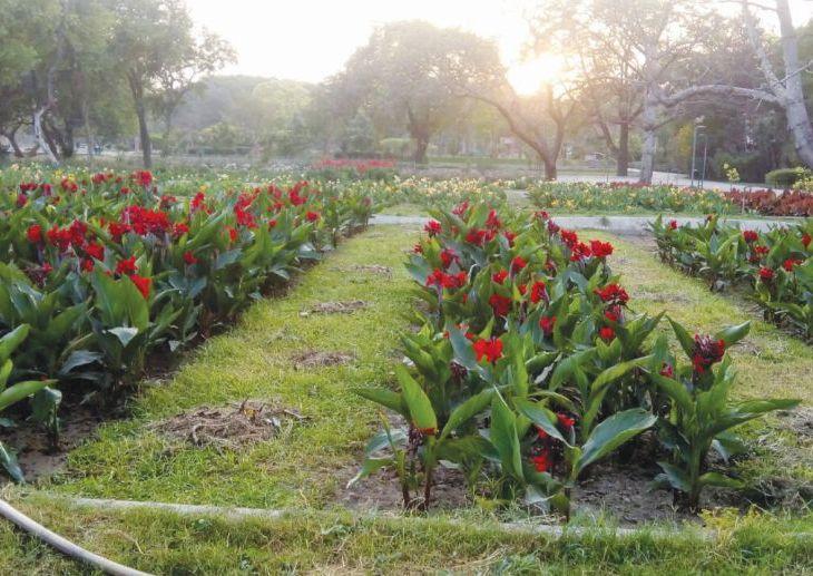 A garden of tombs
