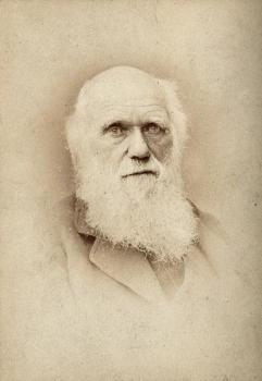 Drawing of Charles Darwin by Barraud (Wellcome Collection)