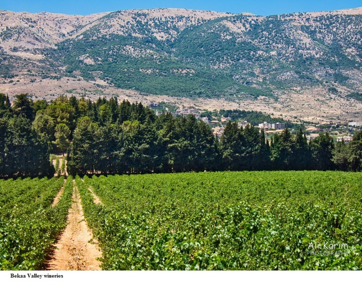 Bekaa Valley wineries
