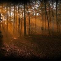 Journey Back to Light: Poem by Ayso Milikbekov